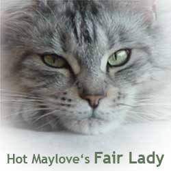 Hot Maylove's Fair Lady
